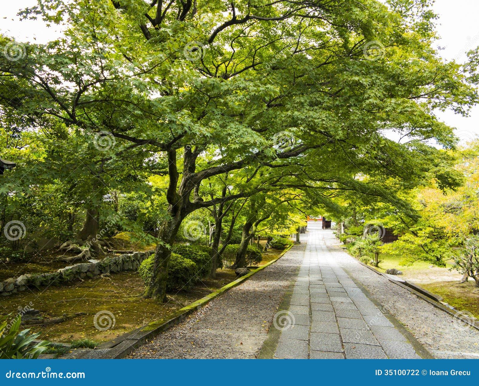 Vecchi alberi sopra il percorso di pietra