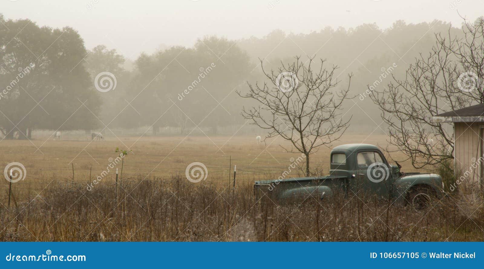 Vecchi camion e cavalli nella foschia