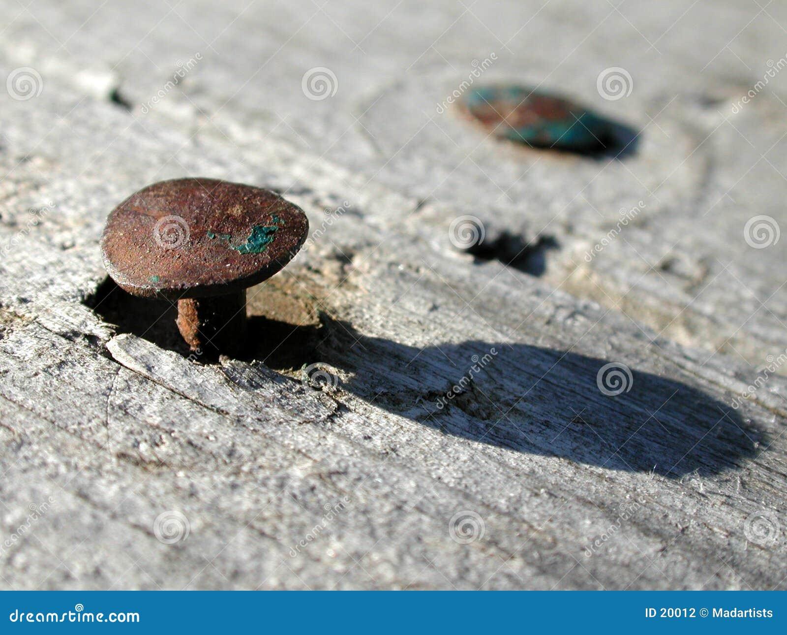 Vecchi chiodi arrugginiti in foto di legno