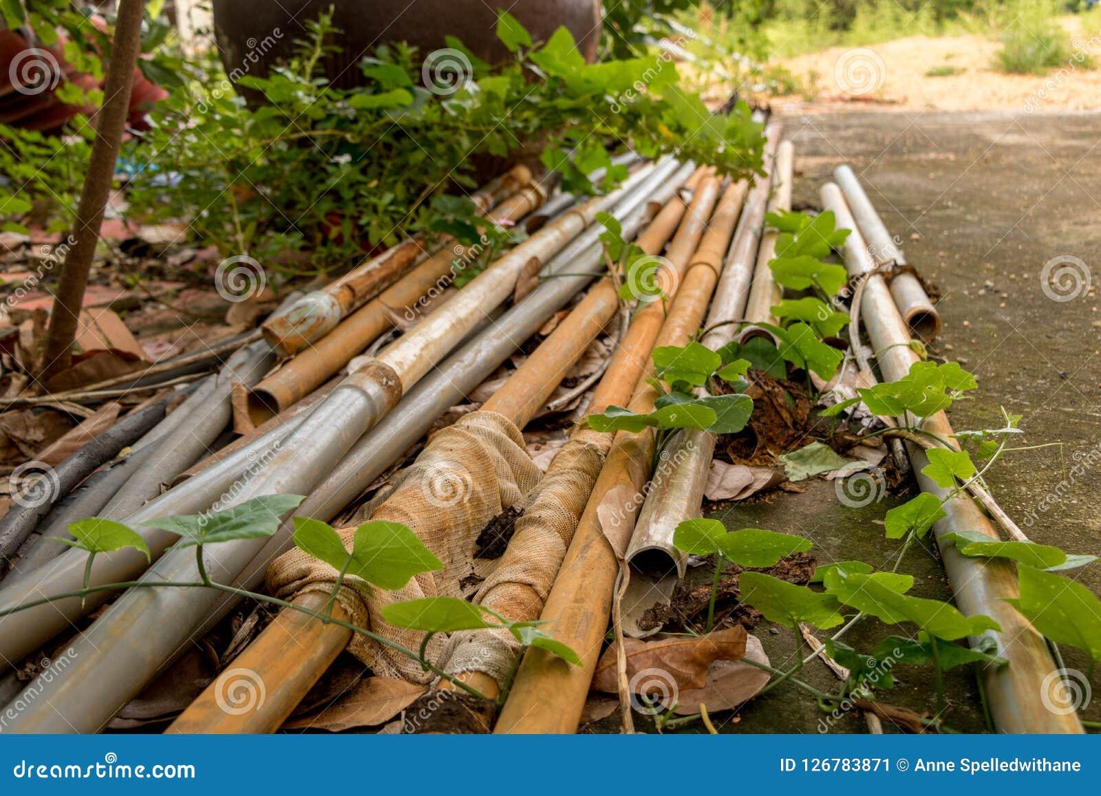 Vecchi tubi d annata del PVC con il tubo flessibile dell acqua - verde all aperto Le del giardino