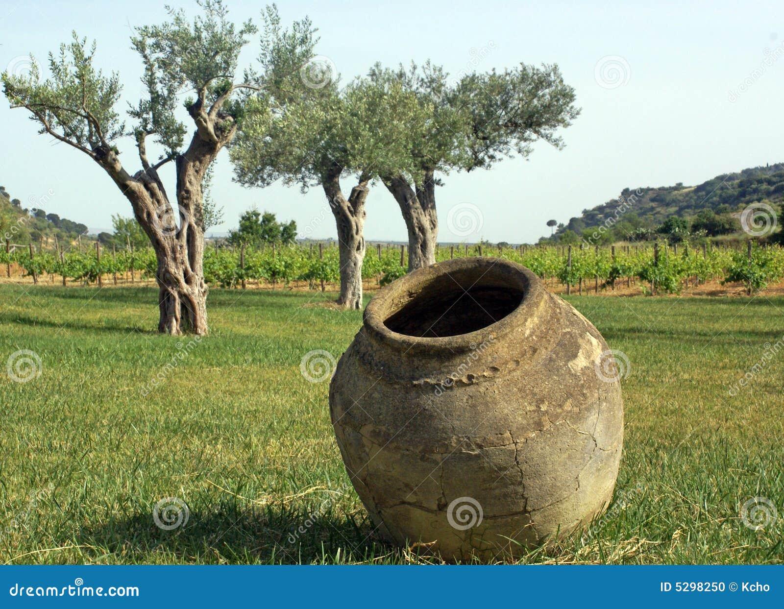 Vecchi vaso e ulivi fotografia stock immagine 5298250 - Giardino con ulivi ...