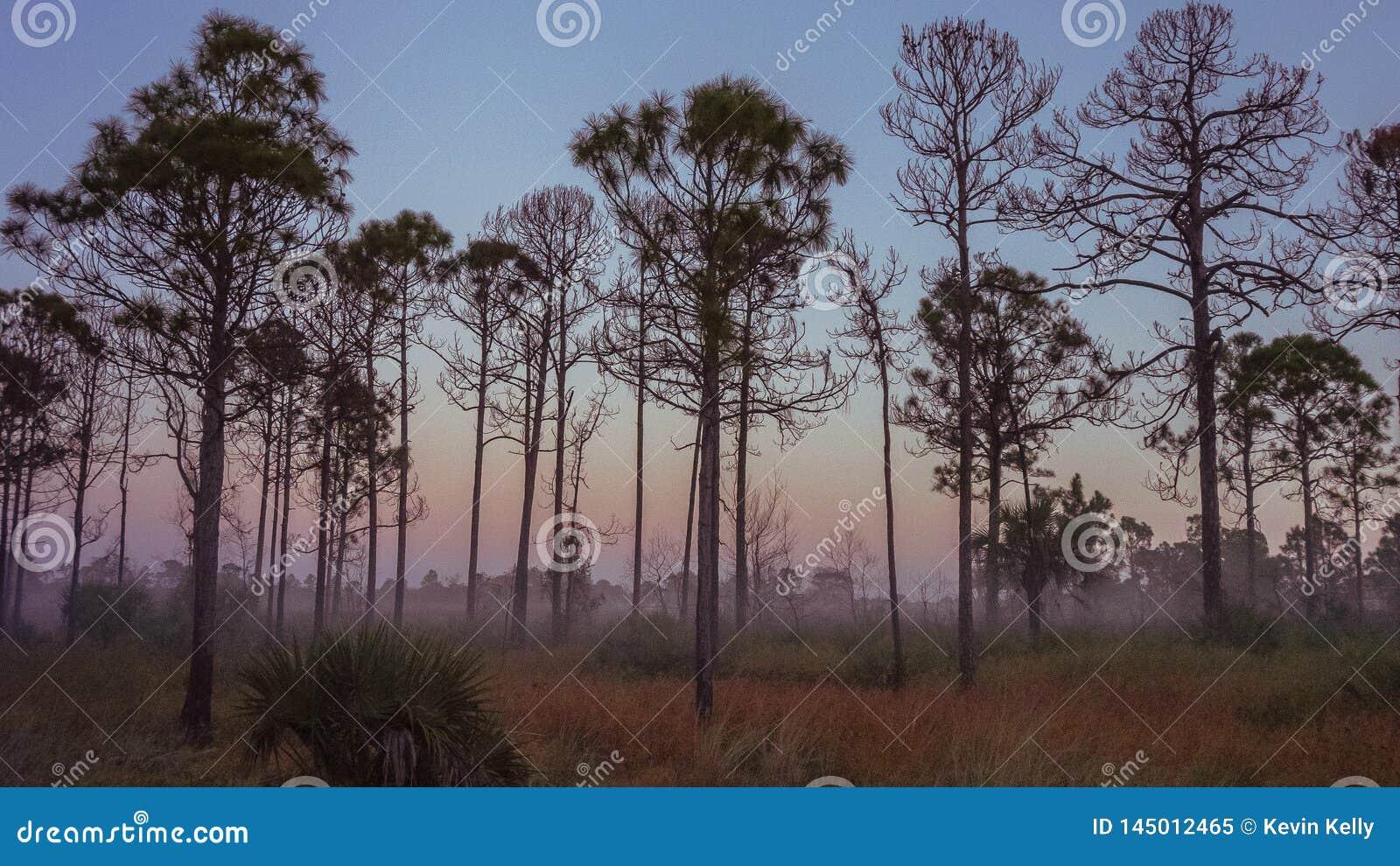 Vecchia alba di Florida