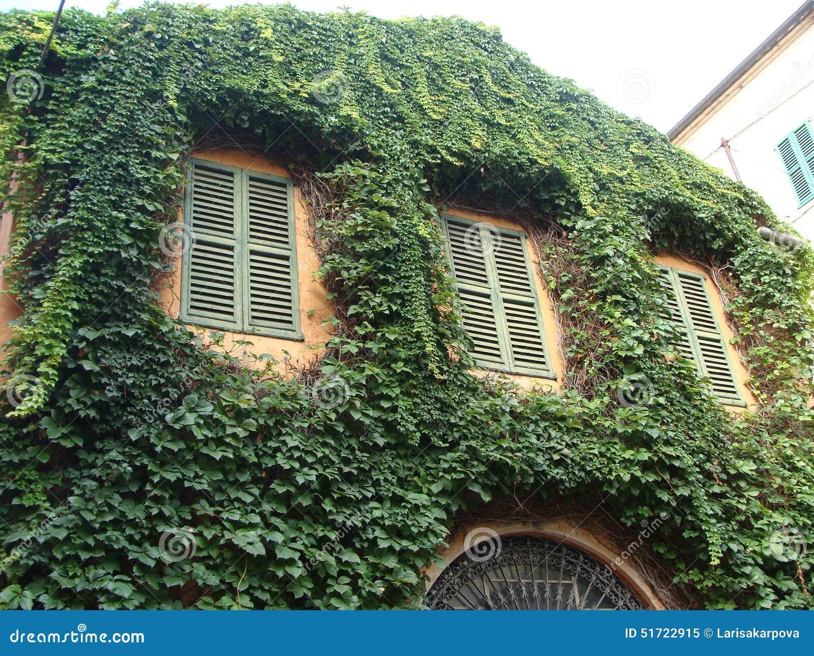 Vecchia Casa Intrecciata Con Le Piante Rampicanti Fotografia Stock - Immagine: 51722915