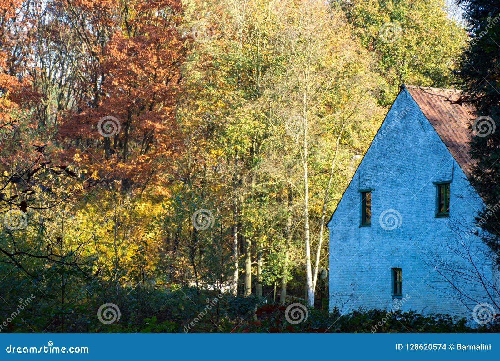 Vecchia casa spaventosa abbandonata in foresta