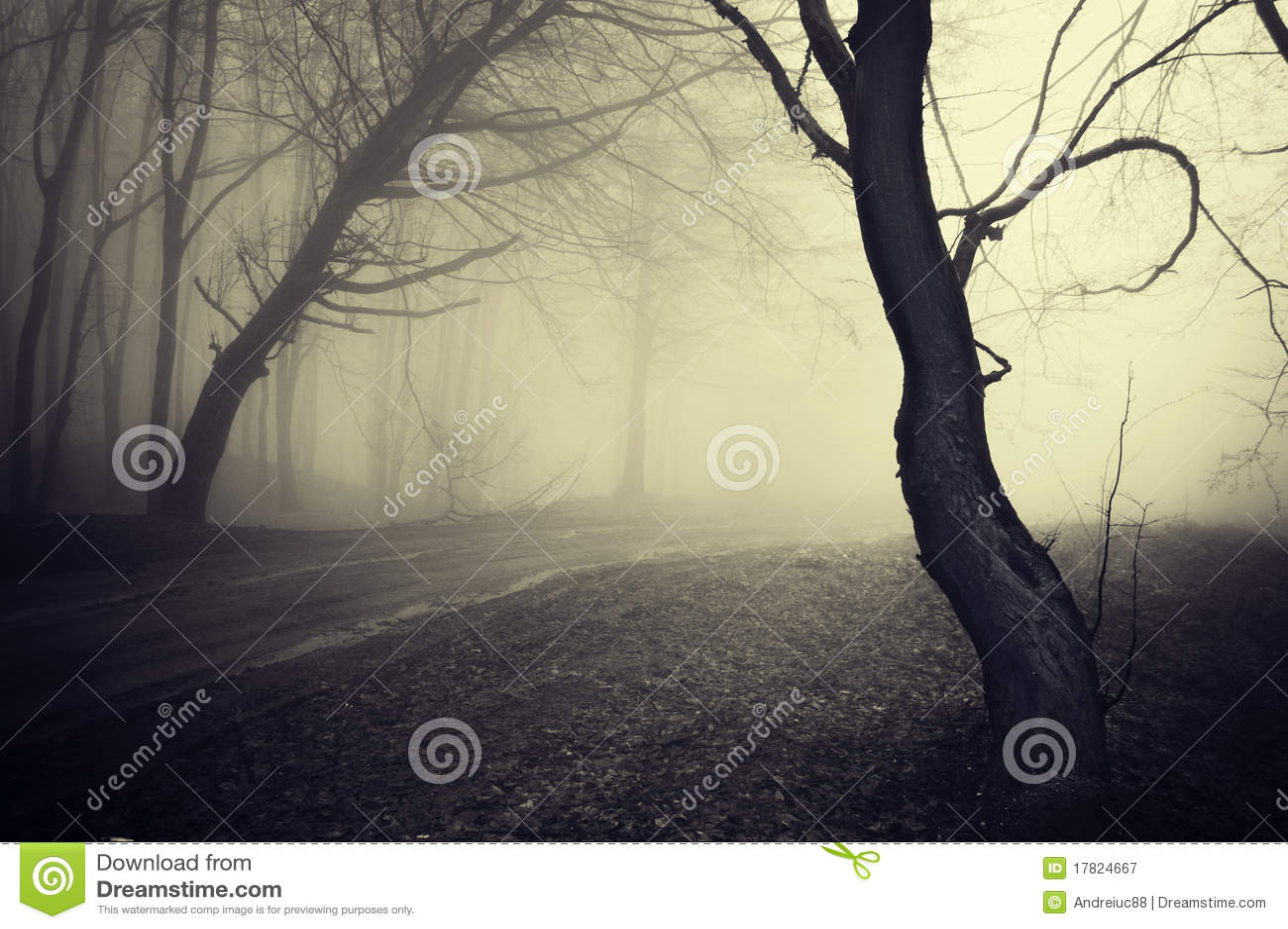 Vecchia foto di sguardo di un percorso attraverso una foresta con