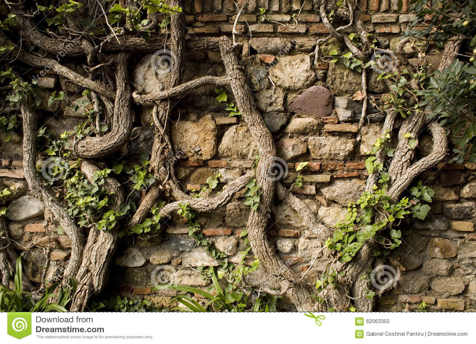 Vecchia parete con le viti