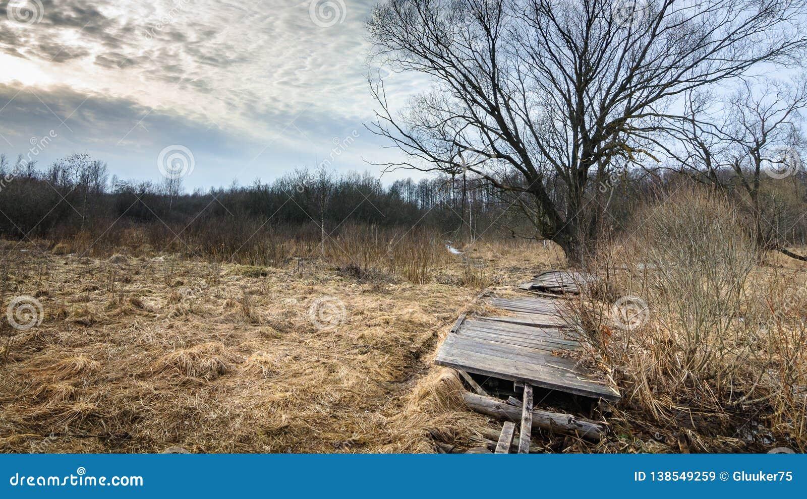 Vecchia strada di legno abbandonata attraverso regione paludosa