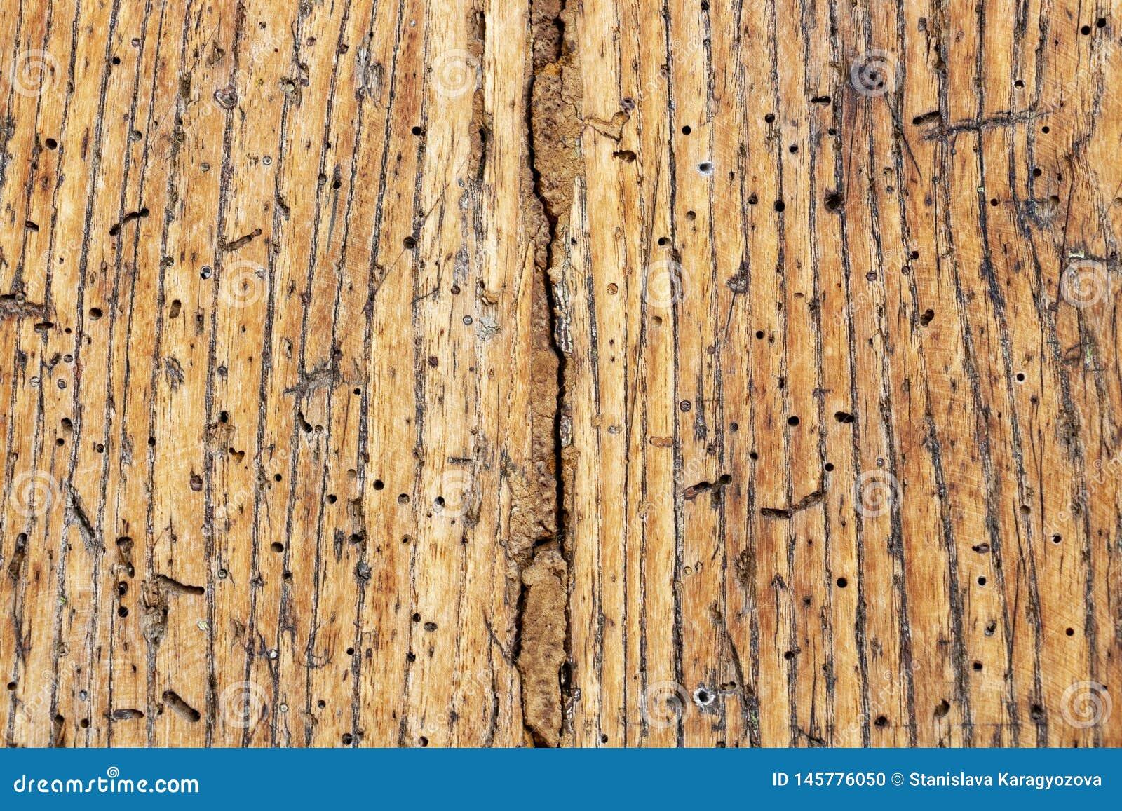 Vecchia superficie di legno nociva