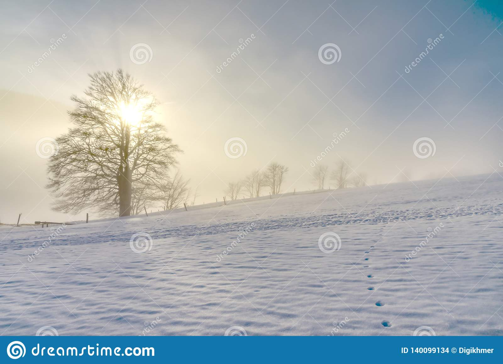 Vecchio albero solo nell inverno congelato