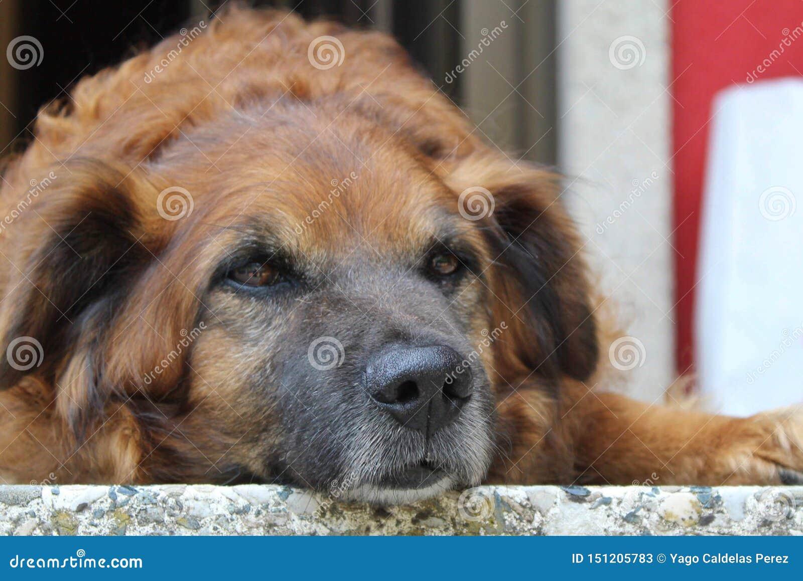 Vecchio cane che prende un resto
