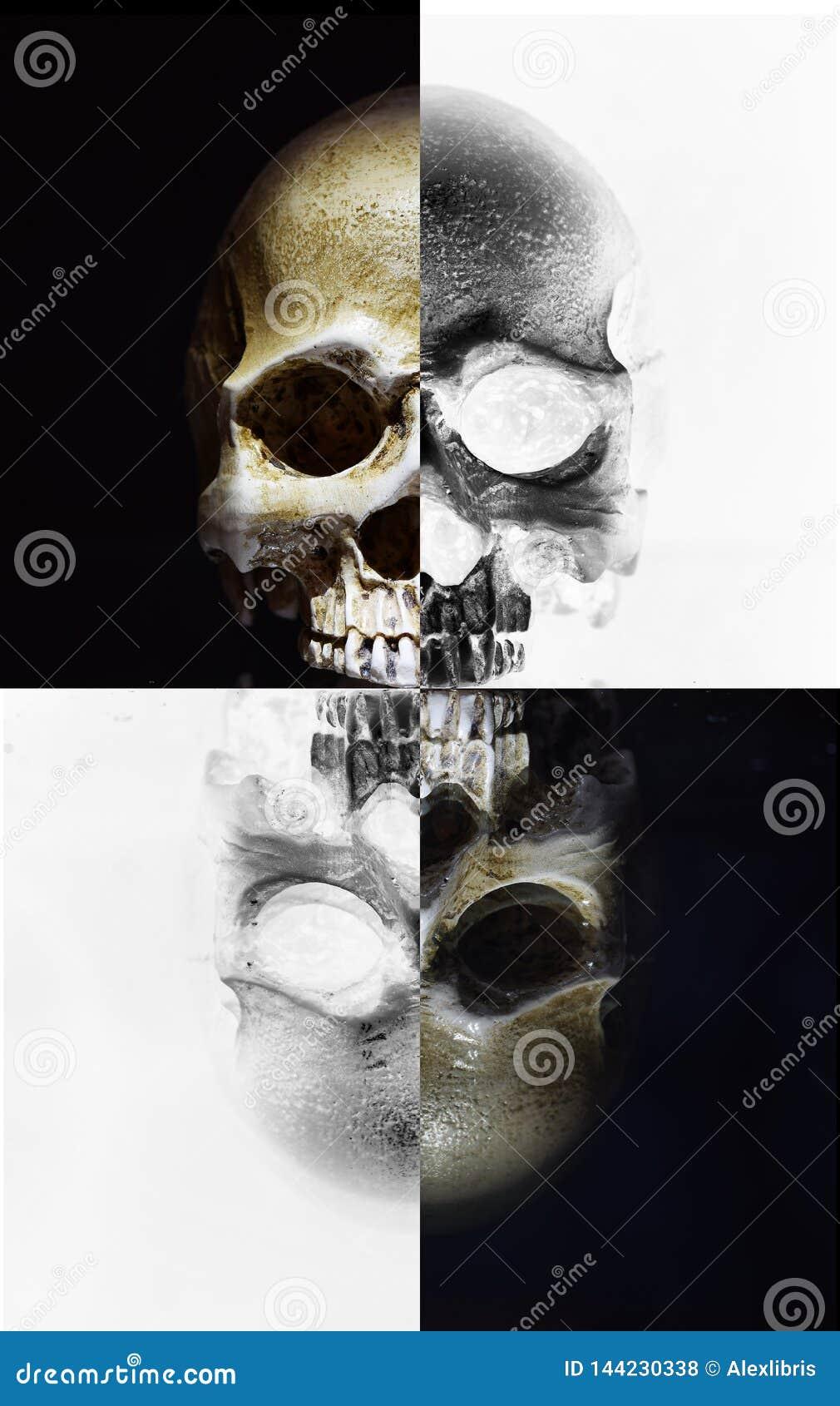 Vecchio cranio medico indicare alla tavola di vetro con la riflessione morbida dalla superficie di vetro