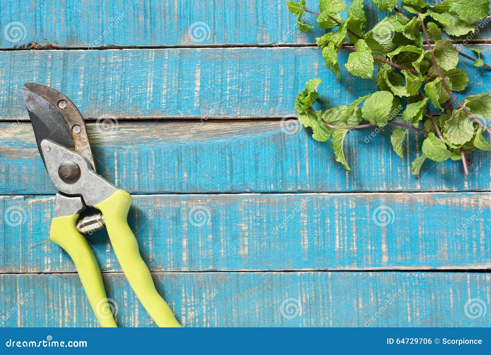 Vecchio pruner con il ramoscello della menta
