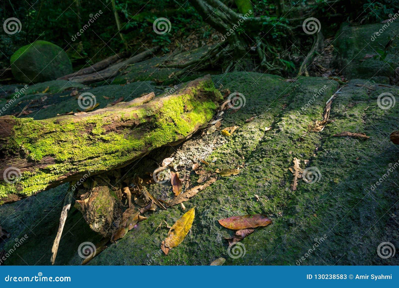 Vecchio ramo marcio incagliato su una roccia