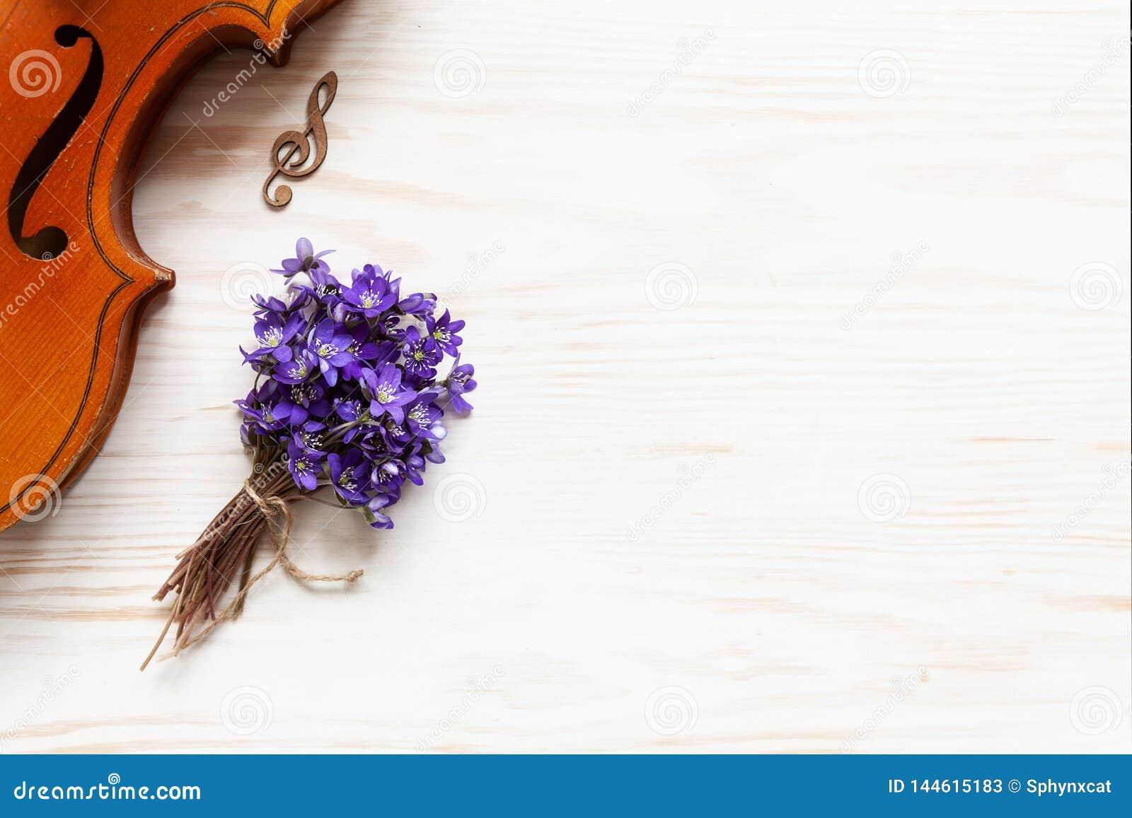 Vecchio violino e piccolo mazzo di hepatica viola fresco sui precedenti di legno bianchi Vista superiore, primo piano