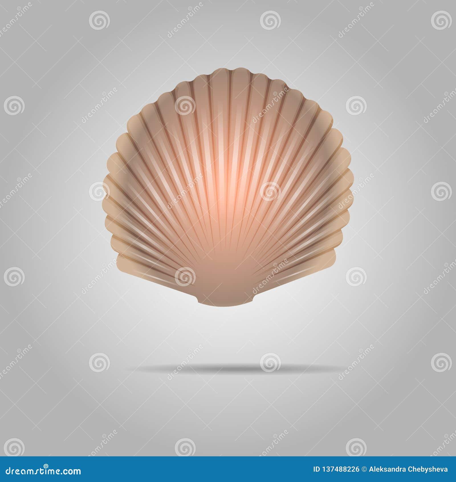 Vecteur de coquillage de feston Crante le fond gris de Shell Isolated On