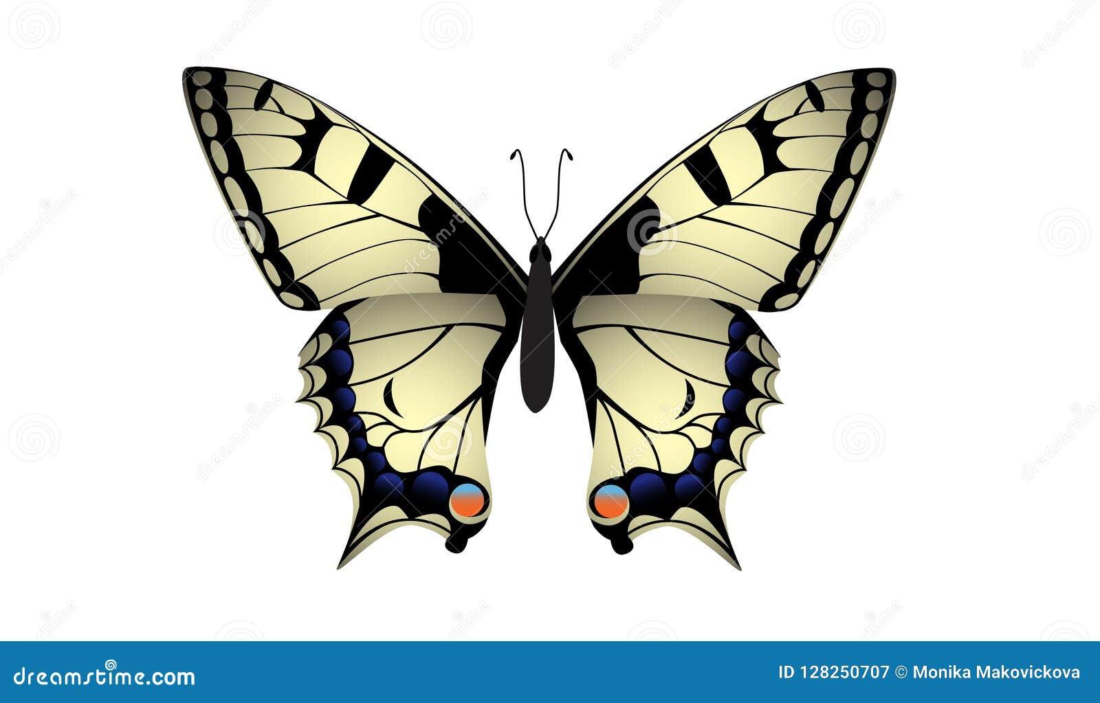 Vecteur de papillon de machaon