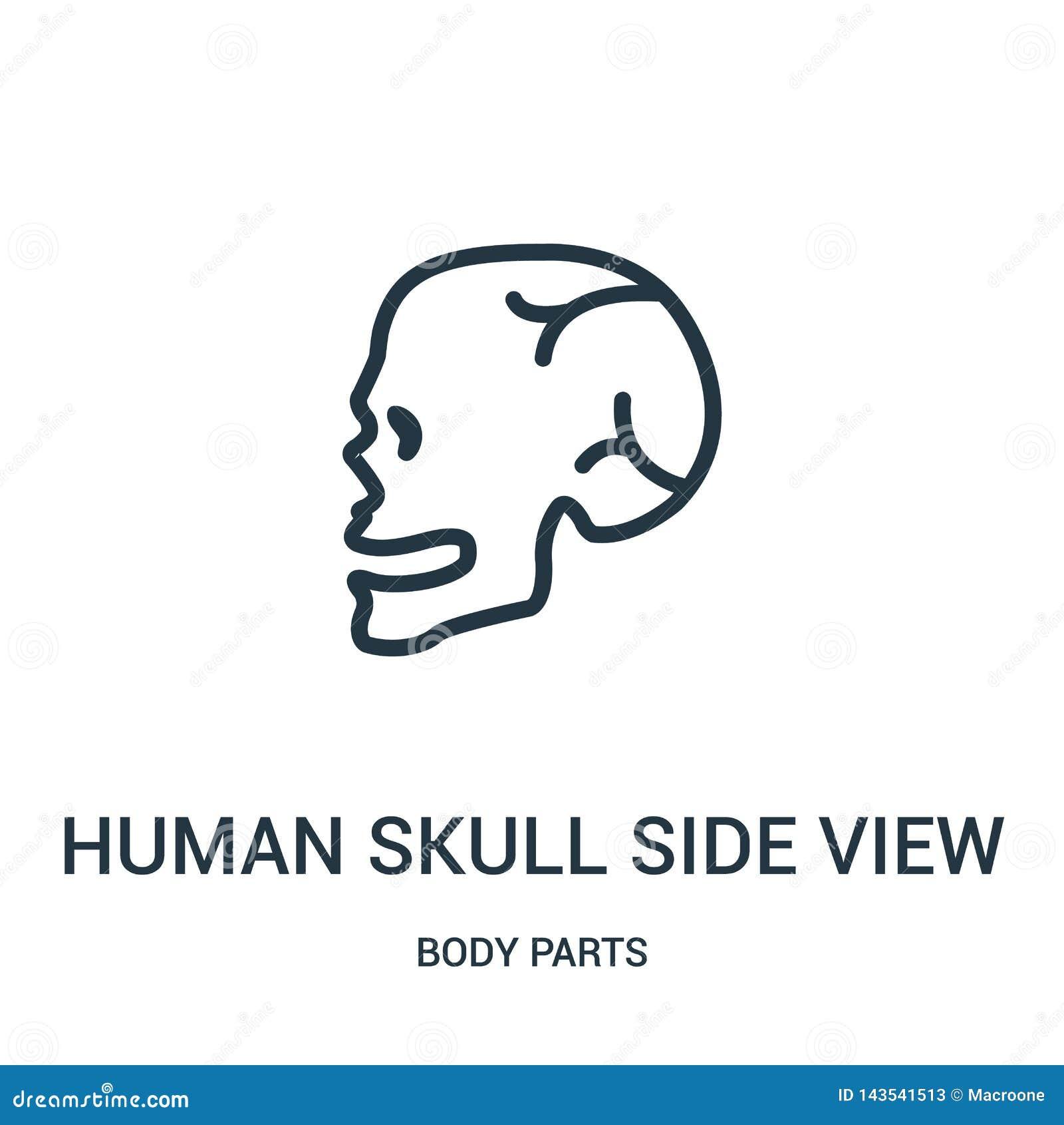 Vecteur humain d icône de vue de côté de crâne de collection de parties du corps Ligne mince illustration humaine de vecteur d ic