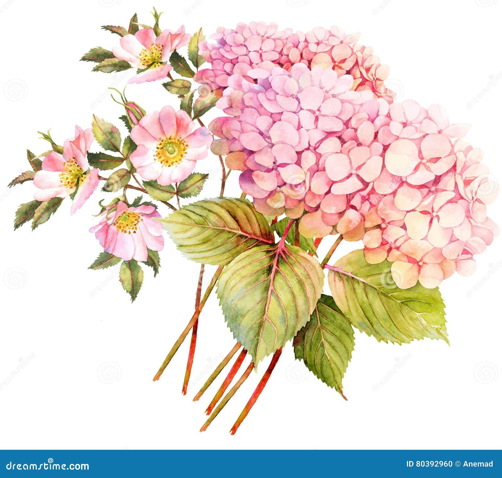 Vecteur Lumineux D Illustration De Fleur De Bouquet Hortensia Et
