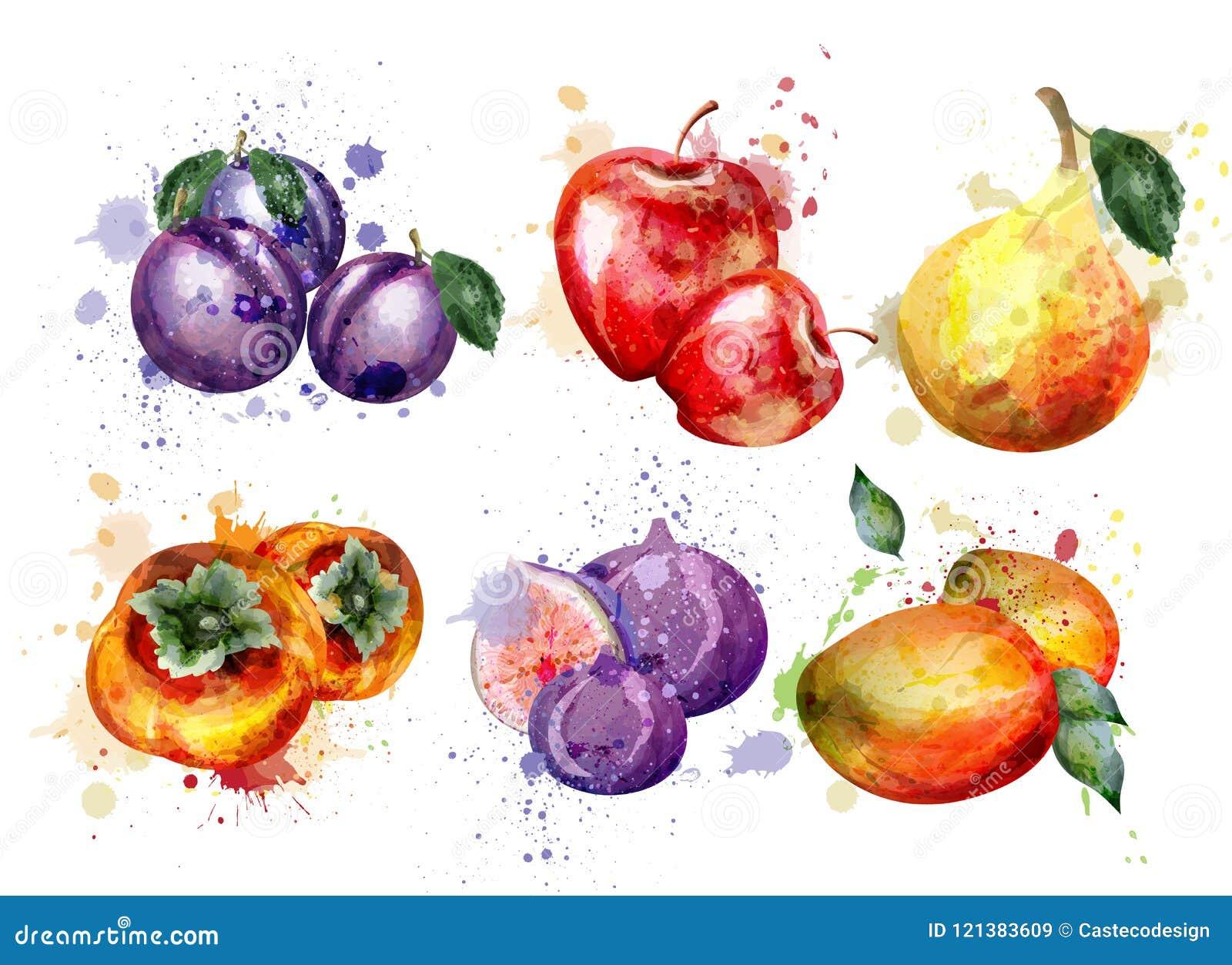 Vecteur réglé par fruits d aquarelle Apple, prune, compositions en fruit d été de poire