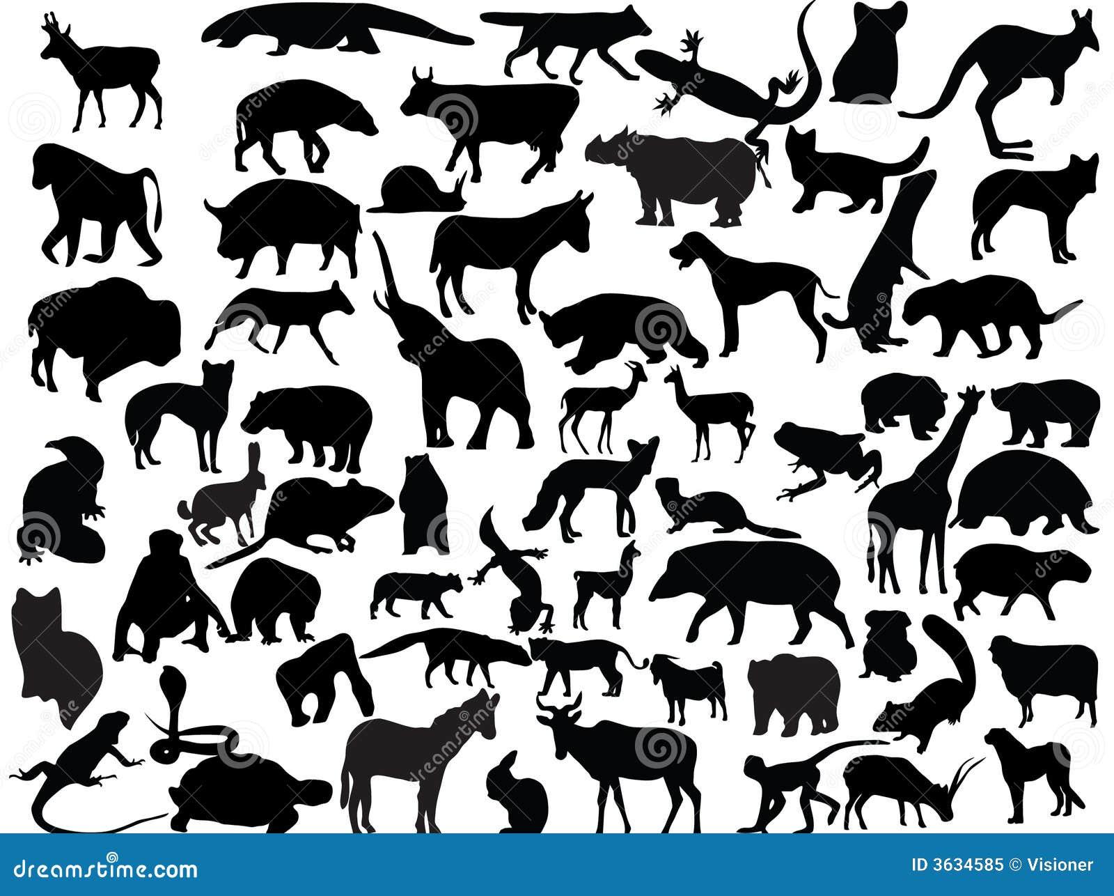 Vecteurs des animaux