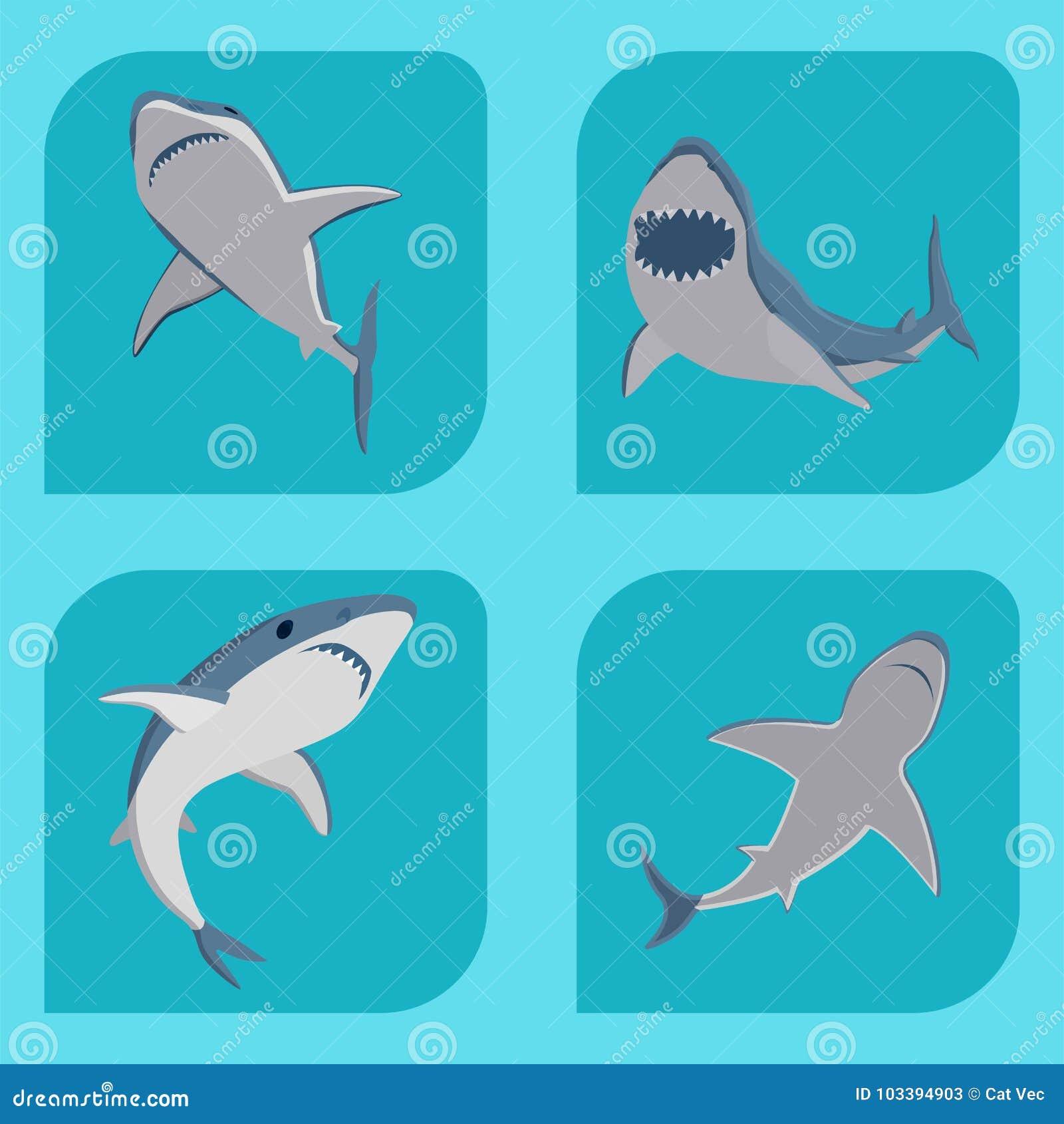 Vector акулы заплывания иллюстрации талисман живой природы характера рыб моря зубастой сердитой животный под водой милый морской