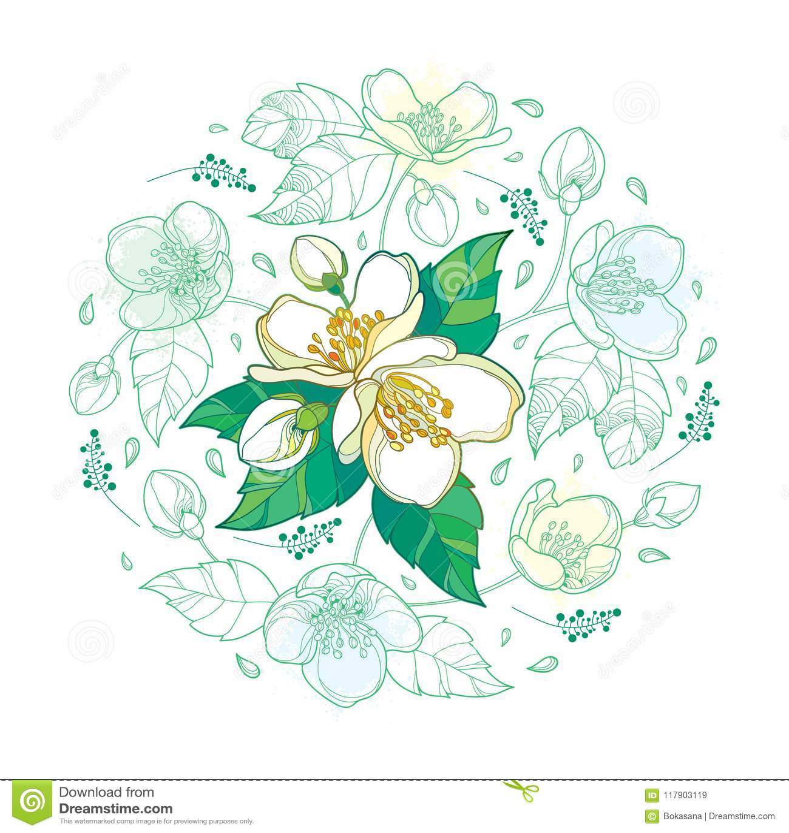 Vector вокруг букета при пук цветка жасмина плана, бутон и богато украшенные листья в пастельная зеленой и белизне изолированные