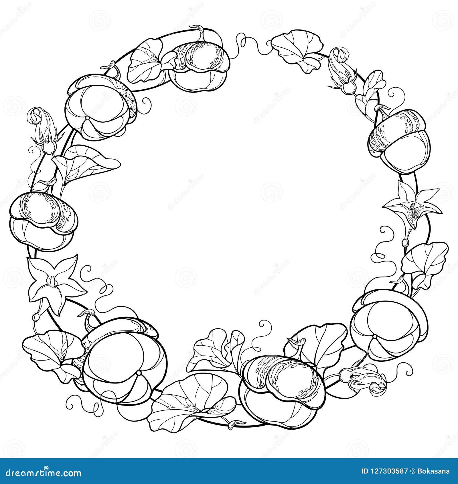 Vector вокруг венка с лозой тыквы плана с цветком, богато украшенными лист в черноте изолированными на белой предпосылке Лоза тык