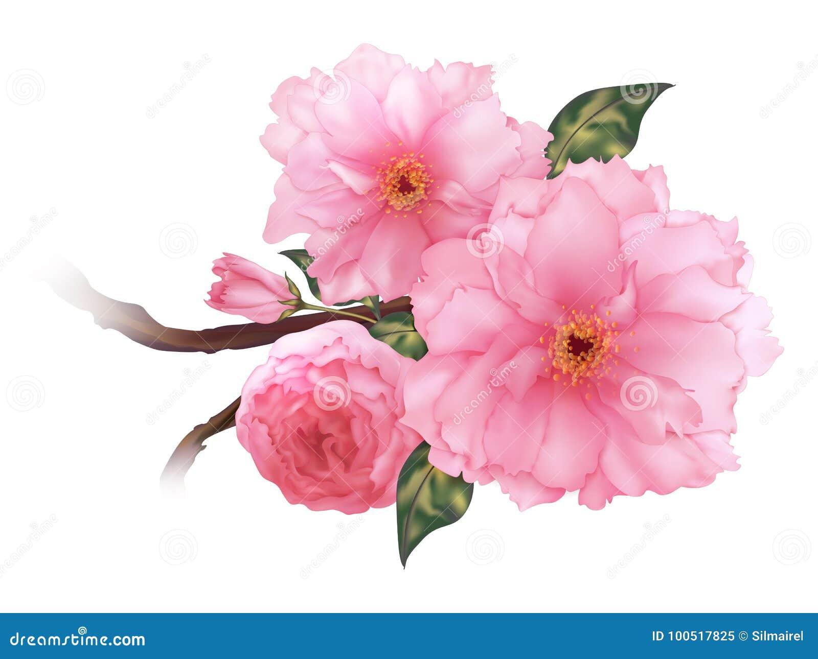Vector a arte digital do ramo cor-de-rosa realístico da flor de sakura da cereja 3D