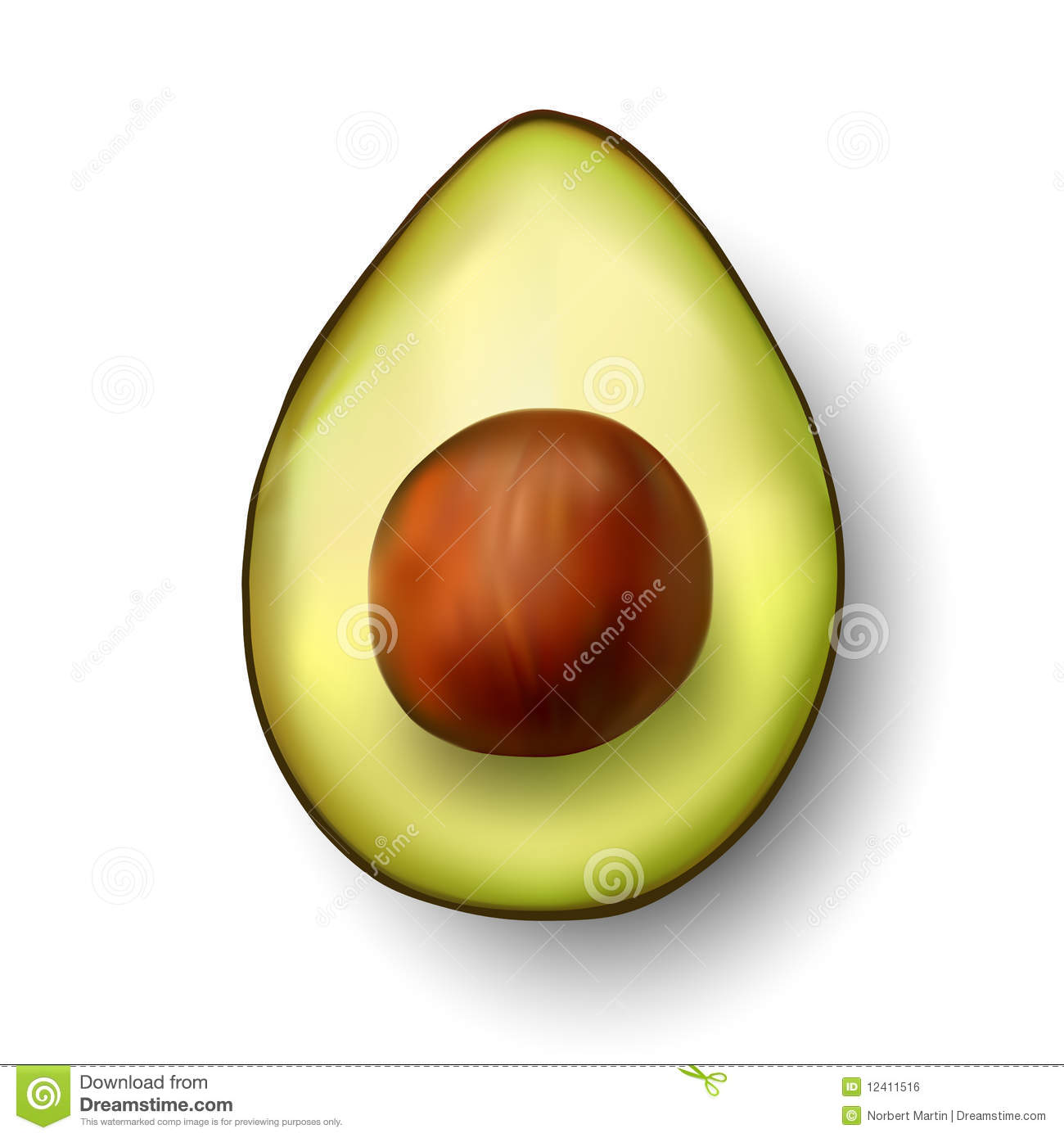 Vector Avocado Illustration Royalty Free Stock Image ...