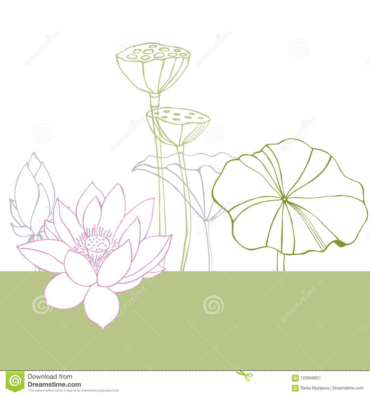 Background With Leaves Flowers And Seed Pods Of Lotus Stock Vector