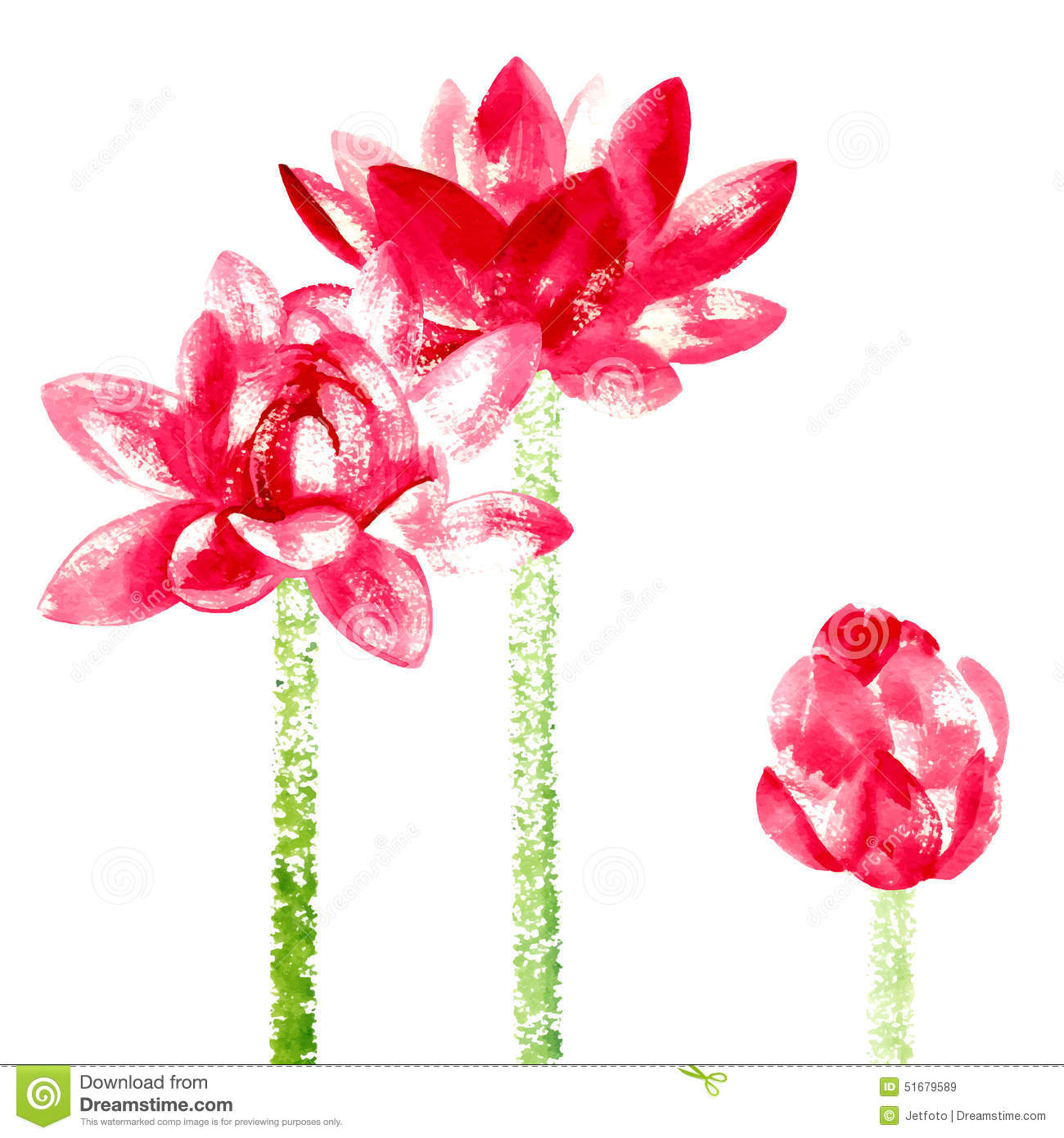 Vector Background With Red Watercolor Lotus Stock Vector