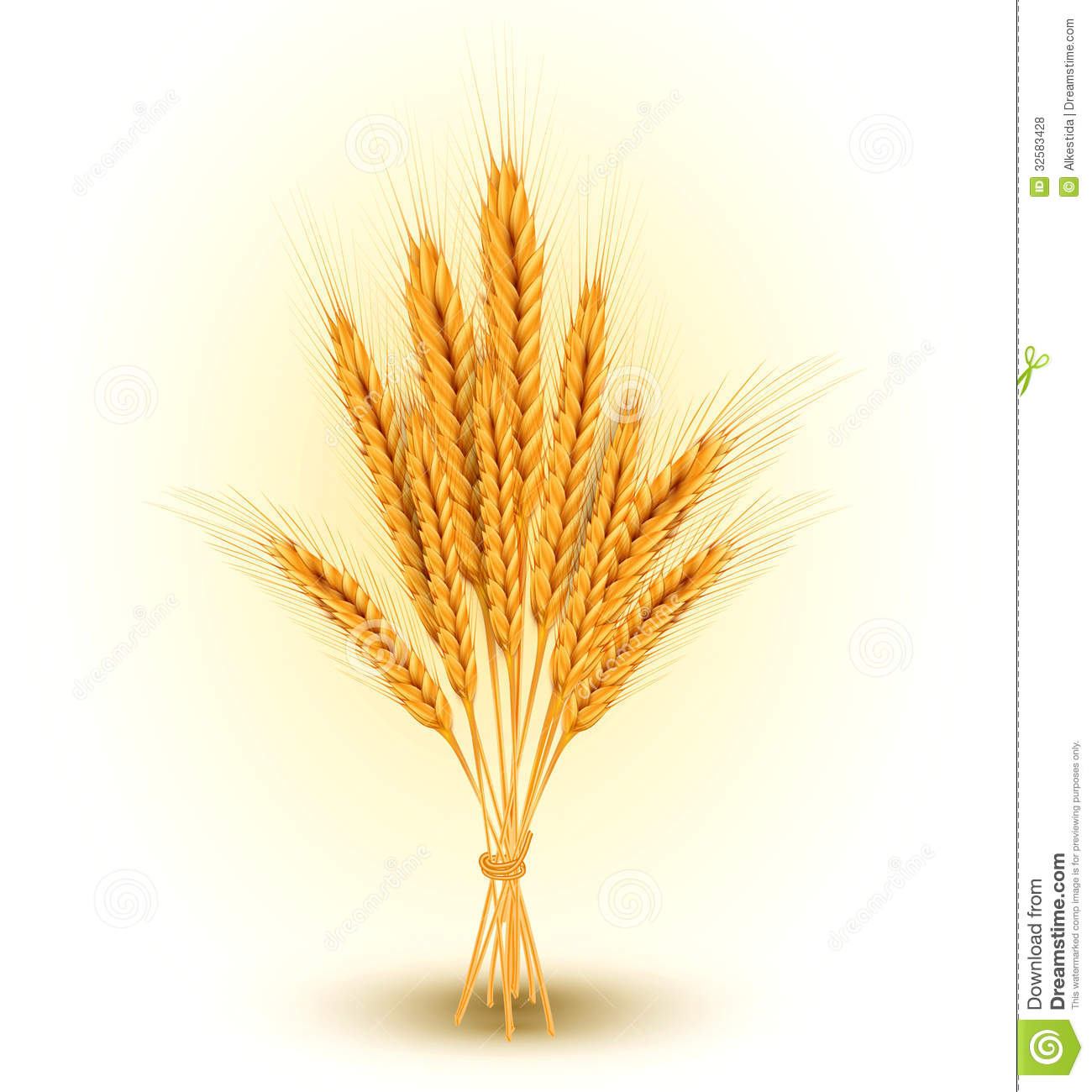 Royalty Free Stock Photos Vector Background Sheaf Golden Wheat Ear Ears Image32583428 on Plant Life Cycle Clip Art