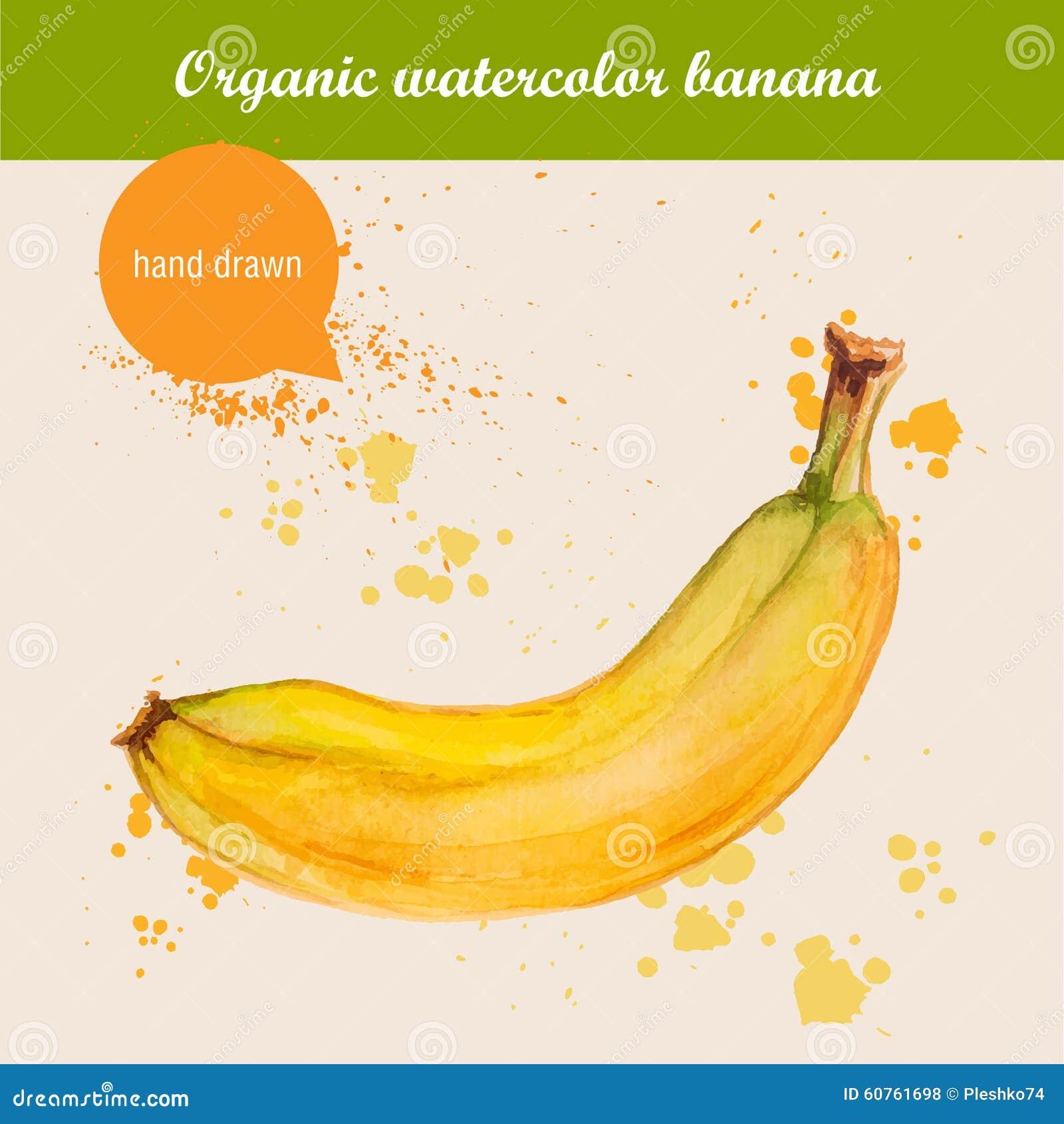 Vector a banana tirada mão da aquarela com gotas da aquarela
