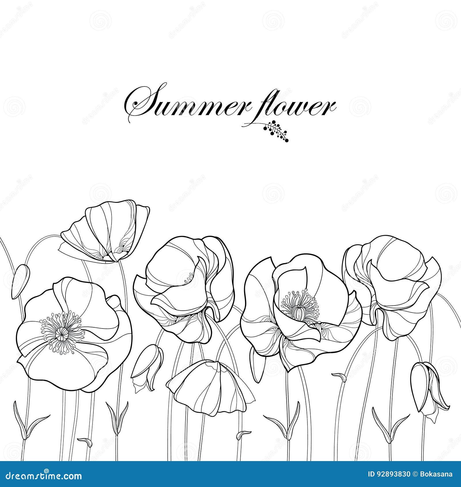Vector a beira com a flor e o botão da papoila do esboço no preto isolados no fundo branco Elementos florais no estilo do contorn