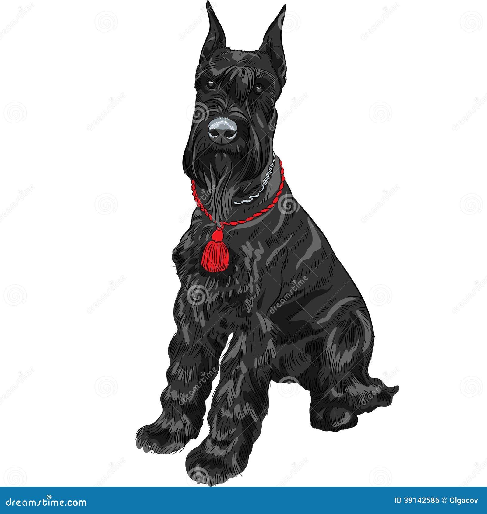 Cartoon Picture Of Schnauzer Dog