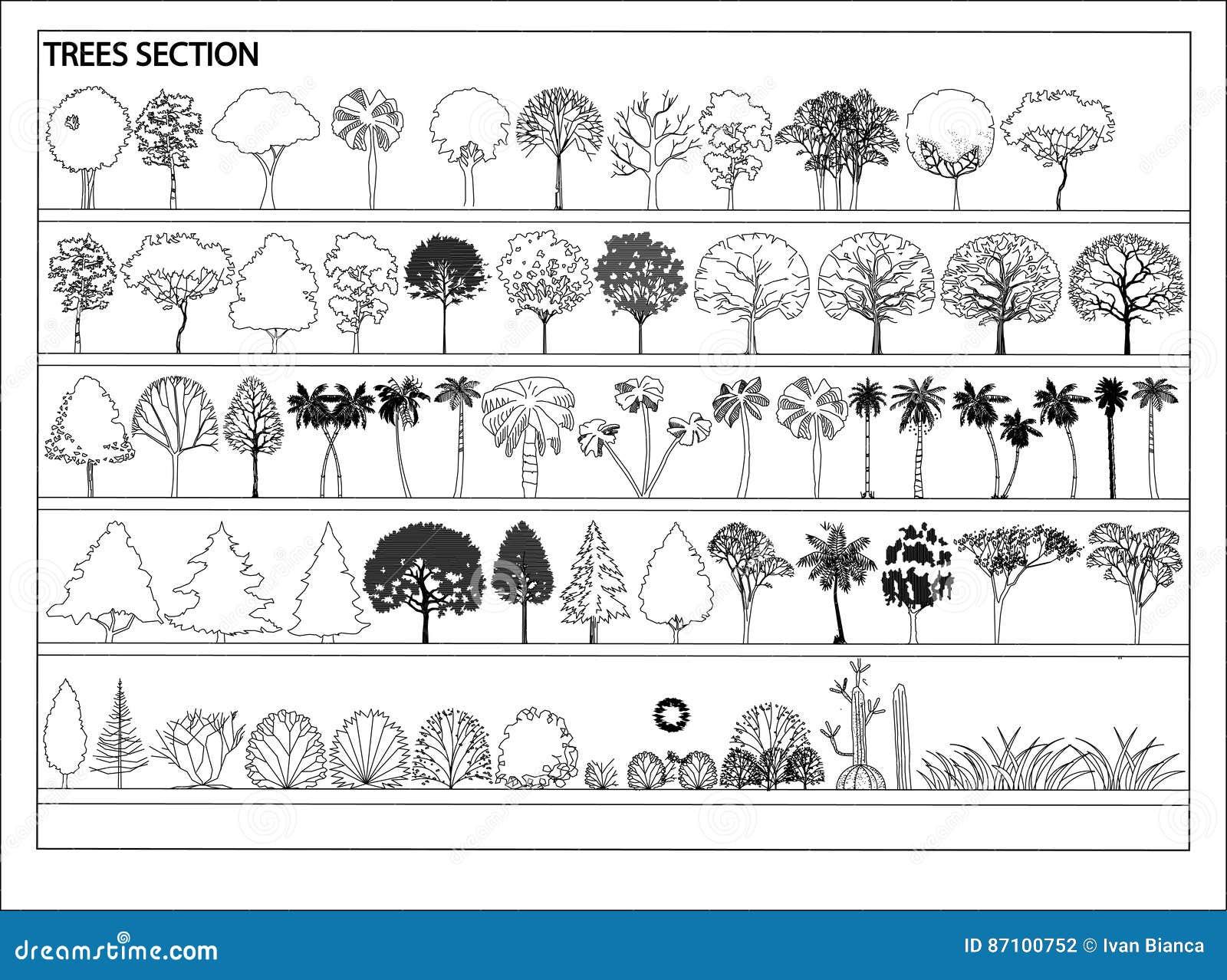 Vector bomen