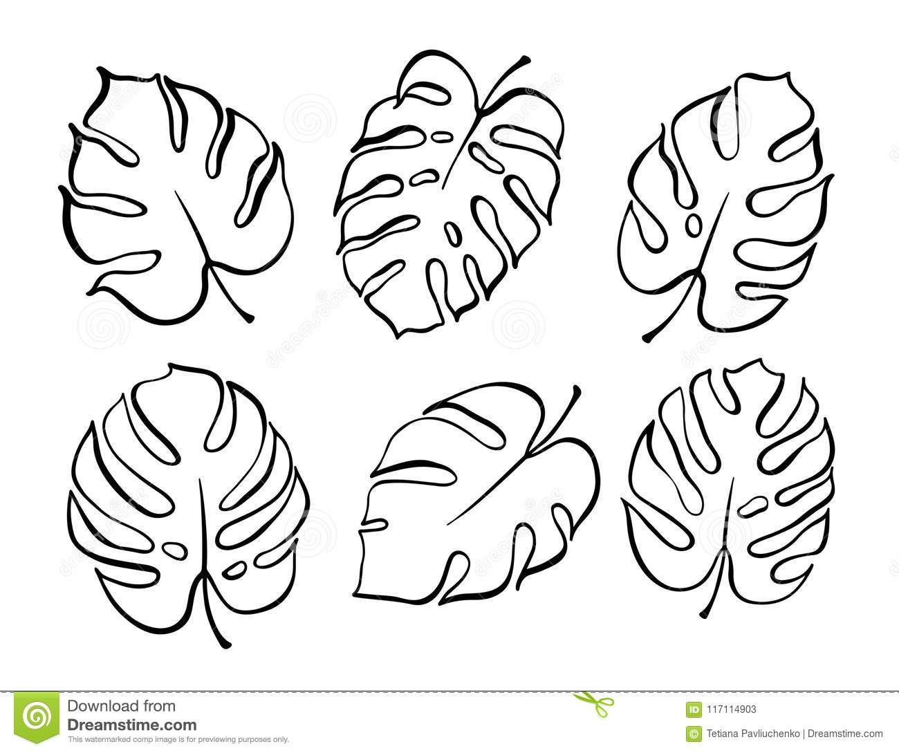 Vector Botanical Illustration Of Monstera Leaf Stock Vector Illustration Of Abstract Botany 117114903 Monstera leaf icon, outline style. https www dreamstime com vector botanical illustration monstera leaf isolated outline drawing modern tropical plant set exotic palm leaves silhouettes image117114903