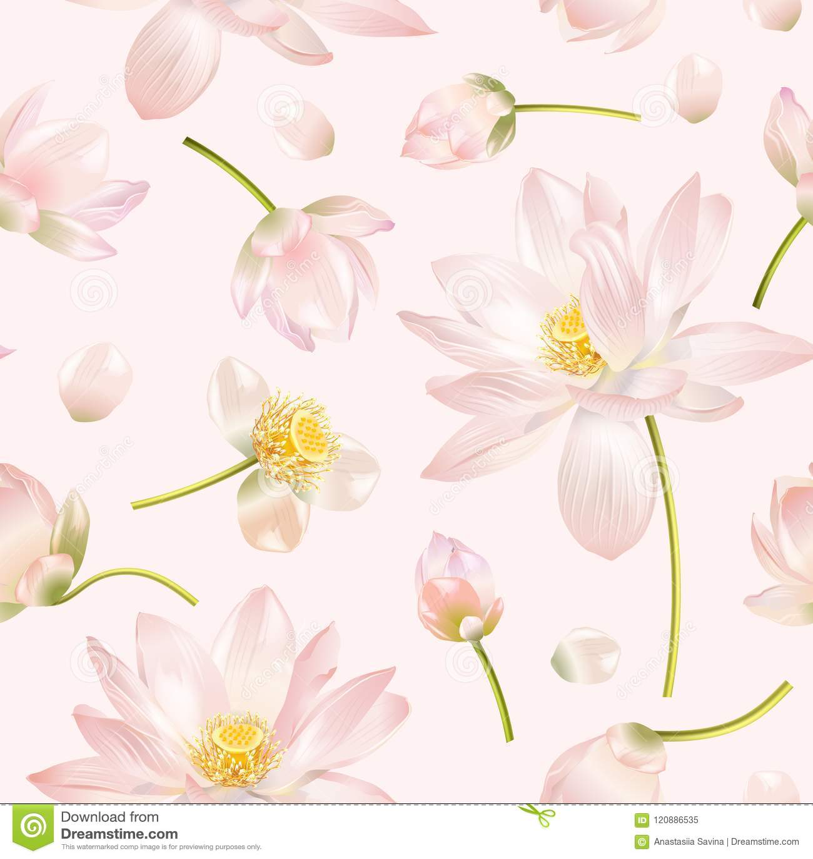 Lotus Flower Pattern Stock Vector Illustration Of Medicinal 120886535