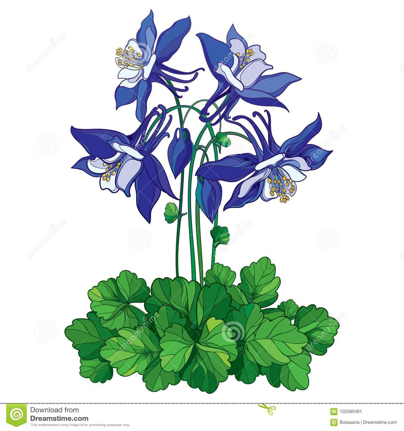 Vector Bouquet With Outline Ornate Aquilegia Or Columbine Flower In