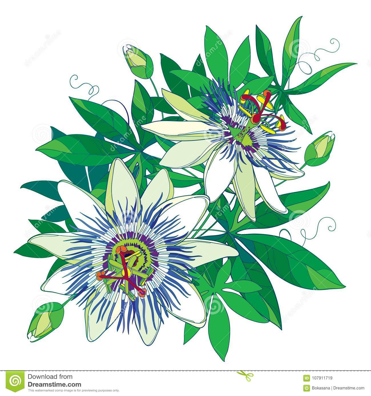 Vector Bouquet Of Tropical Blue Passiflora Or Passion Flower