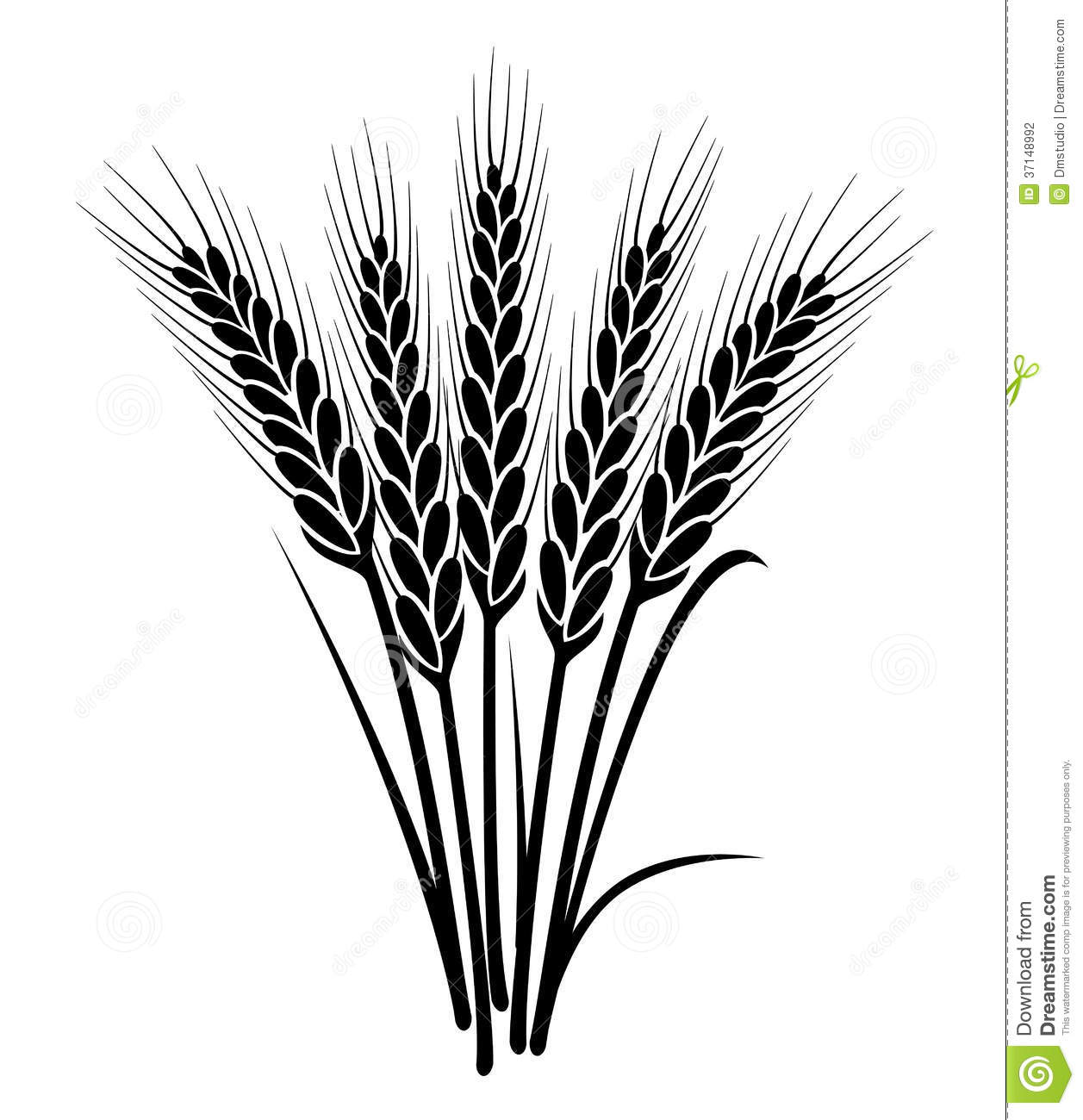 Vector black and white bunch of wheat ears with whole grain and leaves ...