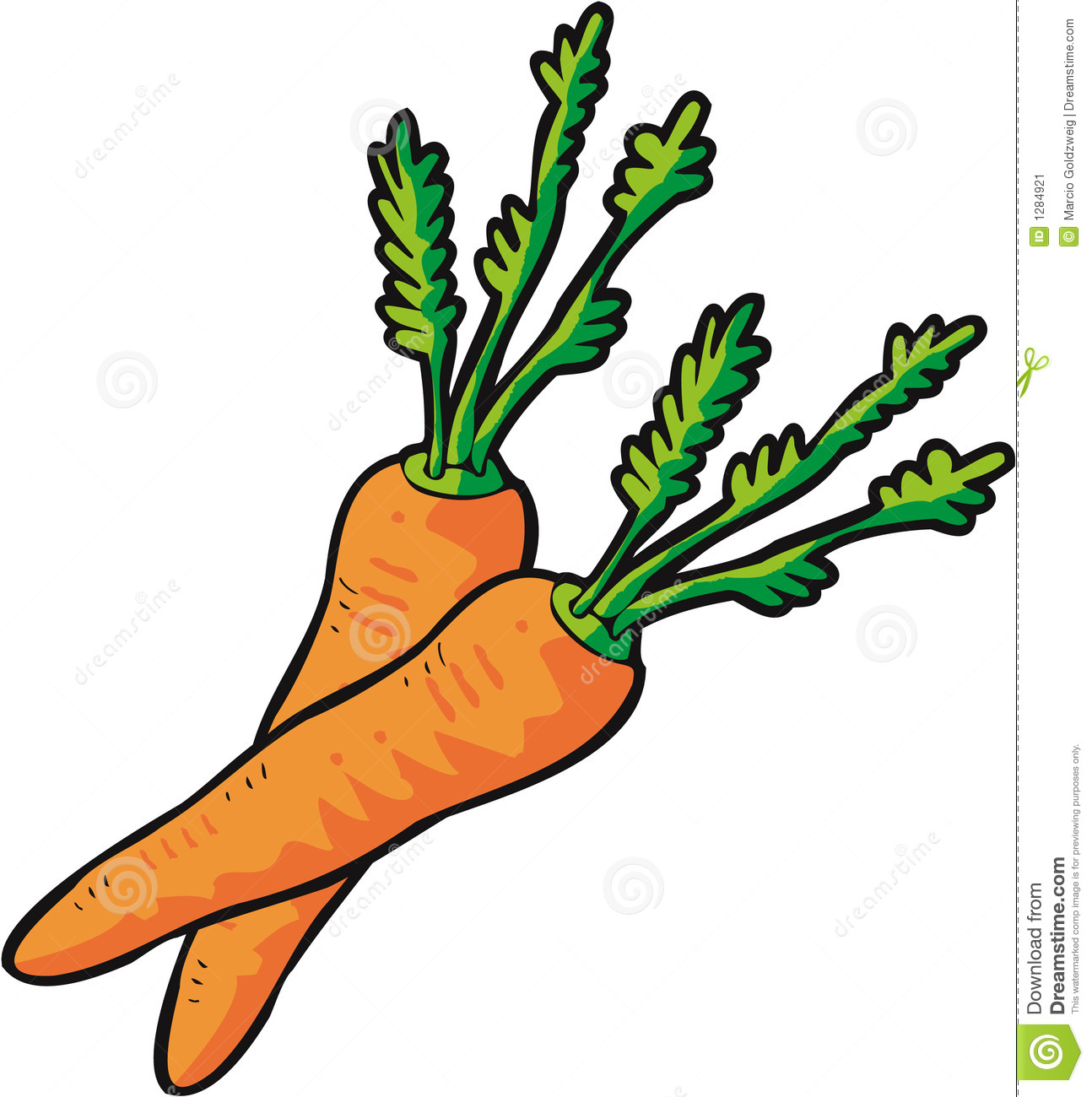 vector carrots stock vector illustration of drawing carrots 1284921 rh dreamstime com carrot clip art free carrot clip art black and white
