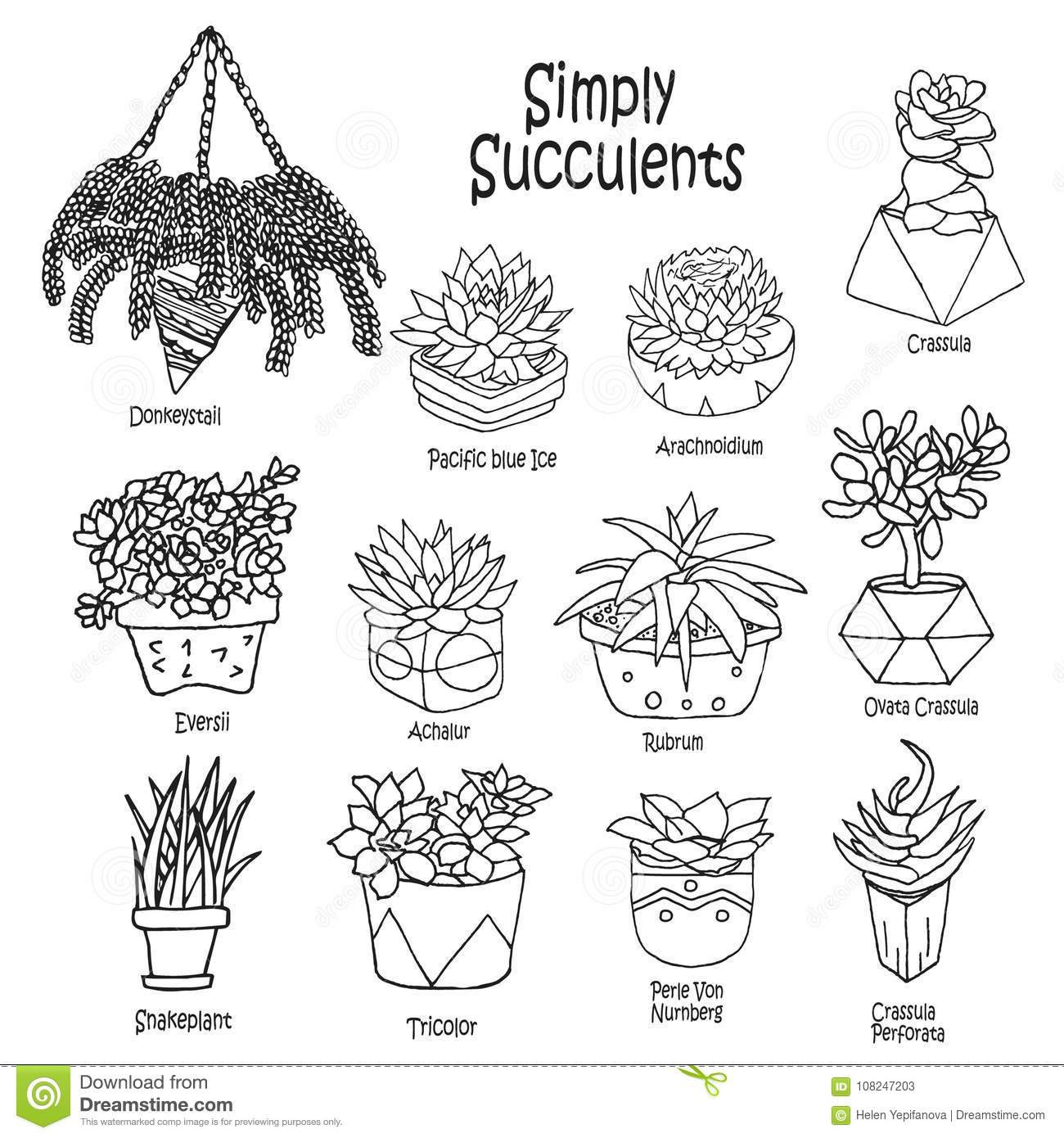 Vector Cartoon Doodle Illustration Collection Succulents Small