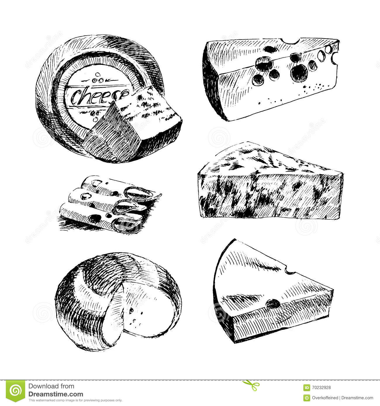 Vector Cheese Sketch Drawing Designer Template. Farm Food