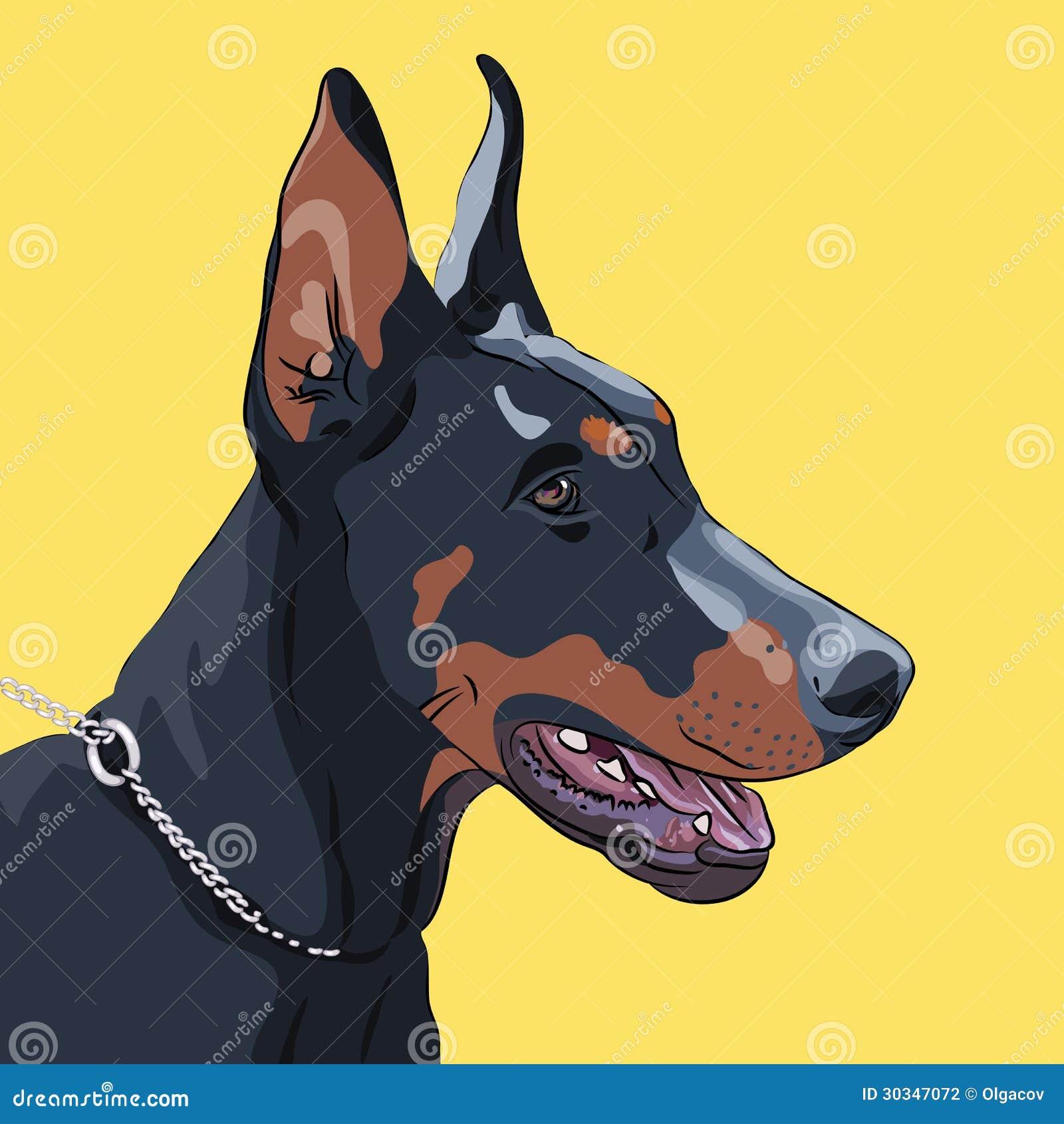 Doberman Dog Photos Free Download