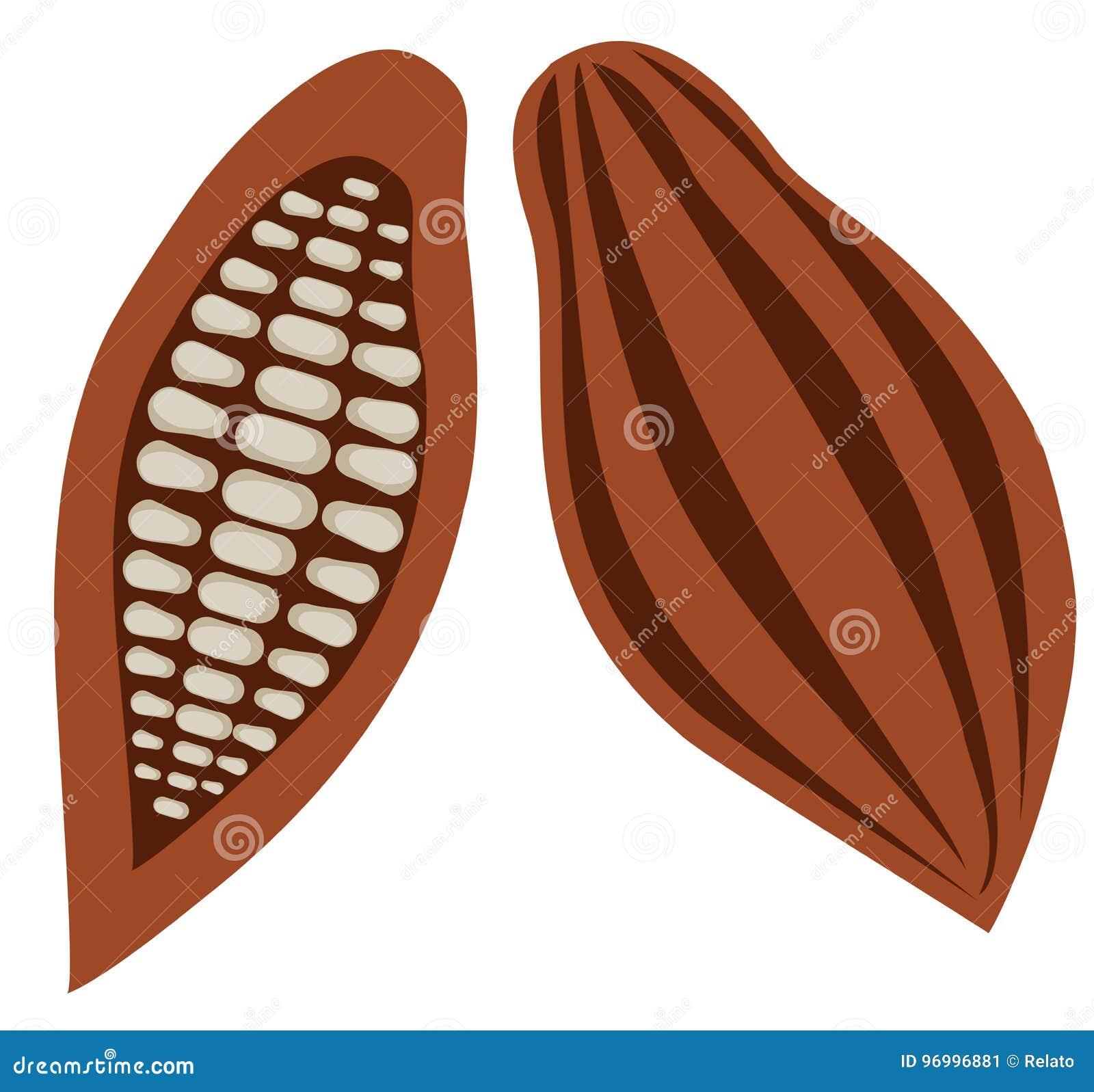 Vector Cocoa Beans