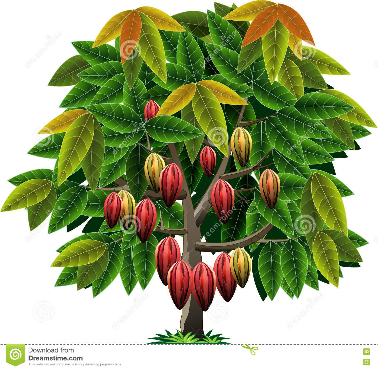 Vector Cocoa Tree Stock Vector Illustration Of Crop 77421630