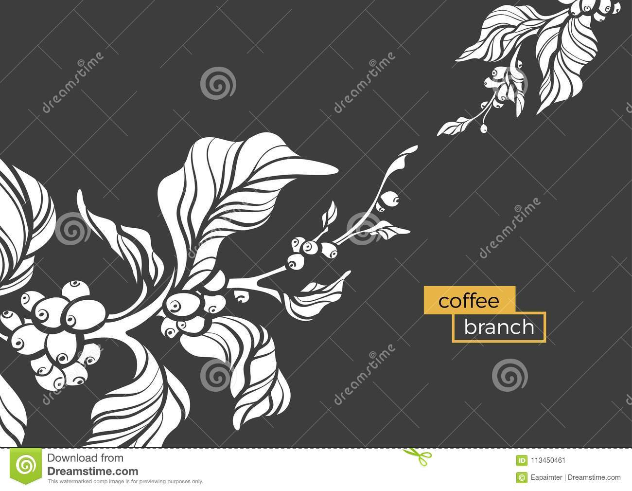 Vector Coffee Tree Branch Template Stock Vector Illustration Of
