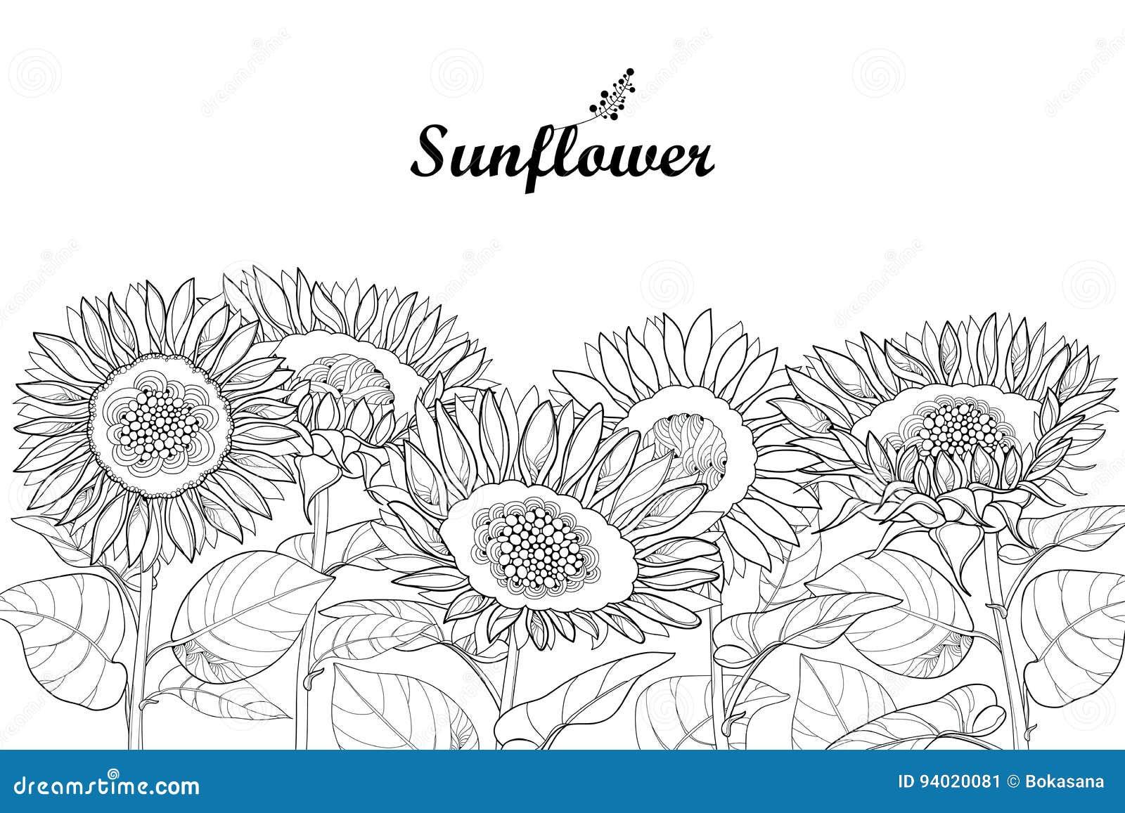 Sunflower Border Stock Illustrations – 1,174 Sunflower ...