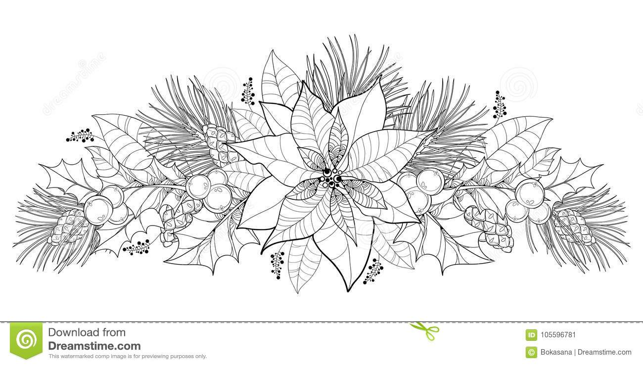 Vector Contour Poinsettia Flower Or Christmas Star In Black Isolated On White Horizontal Border With Outline Holly Berry Mistletoe